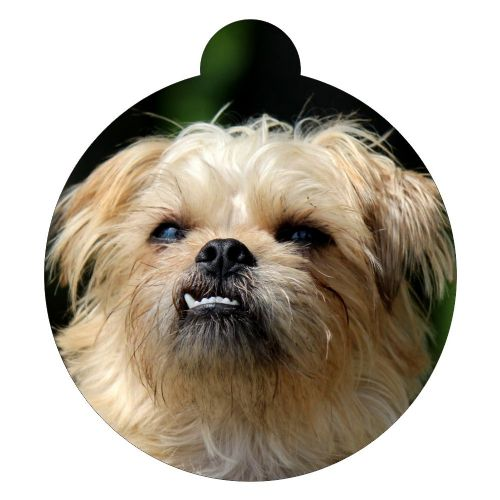Brussels Griffon  Picture ID tag